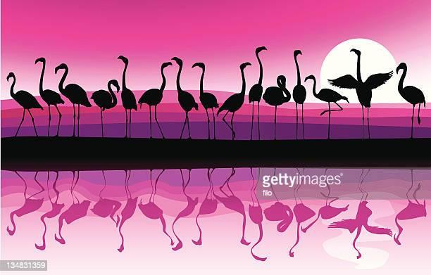 ilustrações de stock, clip art, desenhos animados e ícones de flamingo de fundo - flamingo