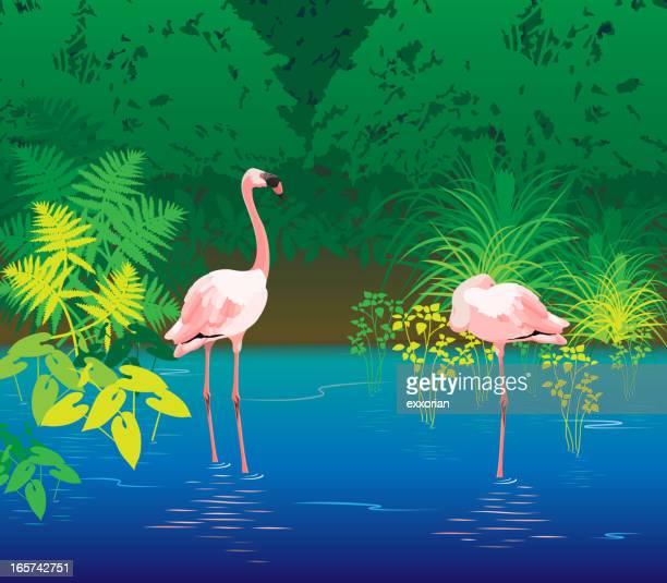 flamingo lagoon - flamingo stock illustrations, clip art, cartoons, & icons