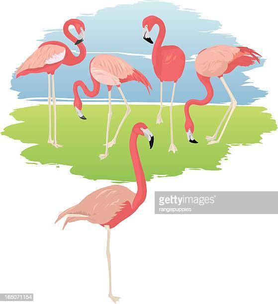 flamingo party - flamingo stock illustrations, clip art, cartoons, & icons