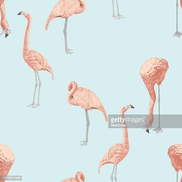 ilustrações de stock, clip art, desenhos animados e ícones de flamingo seamless repeat pattern - flamingo