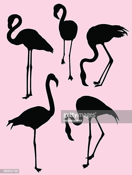 flamingo silhouettes - flamingo stock illustrations, clip art, cartoons, & icons