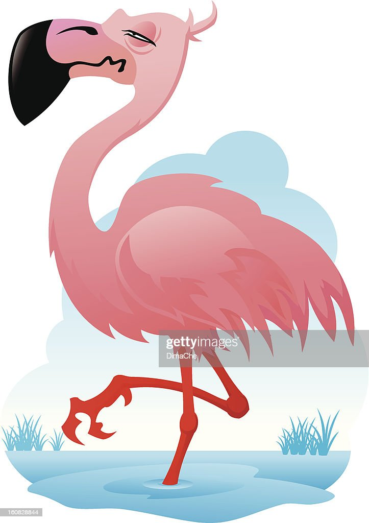 Flamingo : Vector Art