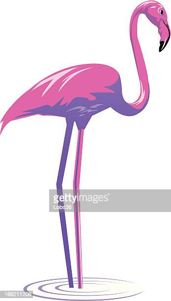 flamingo - flamingo stock illustrations, clip art, cartoons, & icons