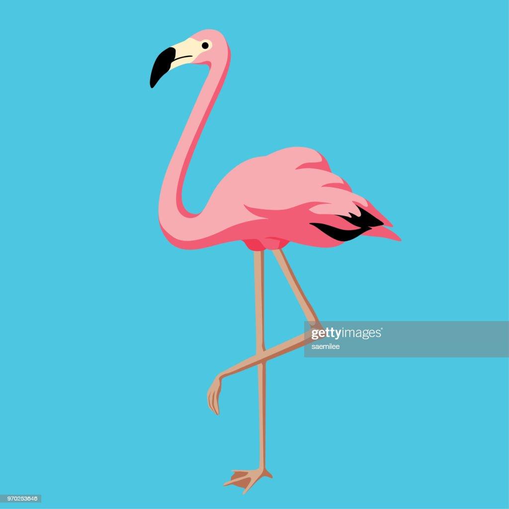 Flamingo : stock illustration