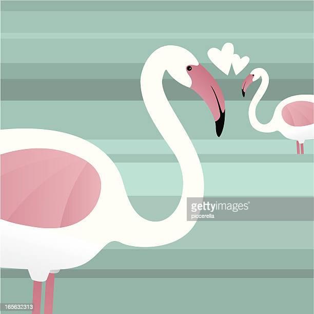 ilustrações de stock, clip art, desenhos animados e ícones de foenicopterídeos em amor - flamingo
