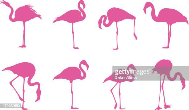 flamingos silhouettes - flamingo stock illustrations, clip art, cartoons, & icons