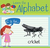 Flashcard letter C is for cricket