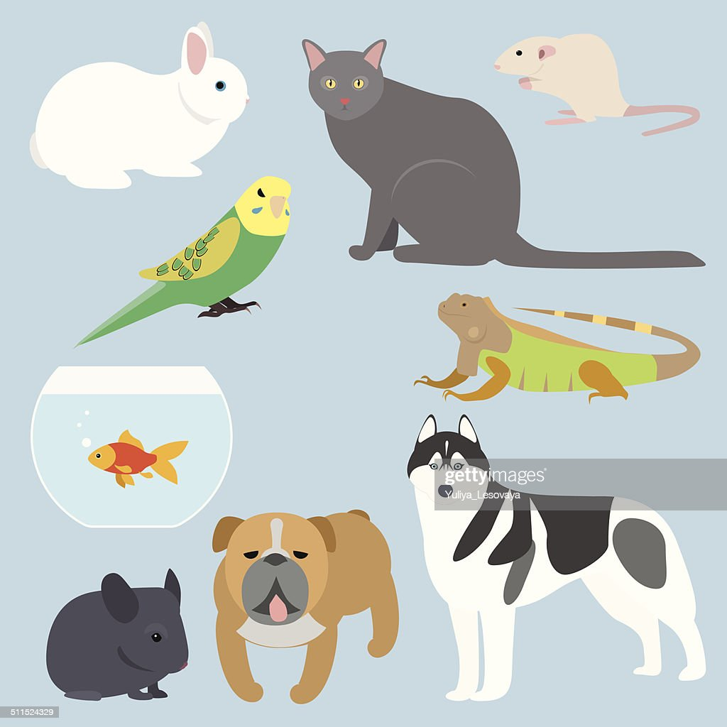 Flat design all kind of pets