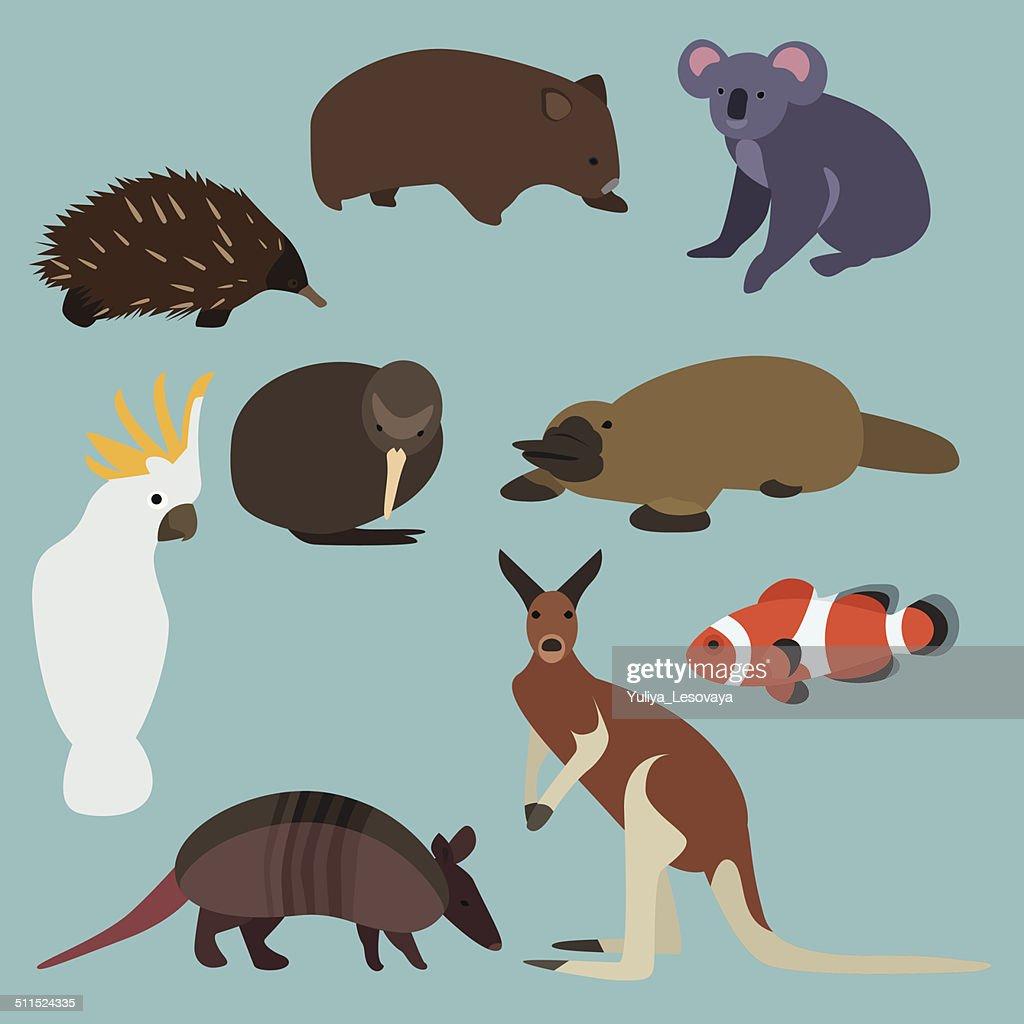 Flat design animals of Australia