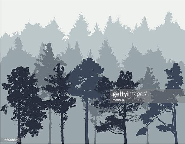 Flat digital background of a conifer tree forest