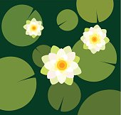Flat drawing of water lilies viewed from above