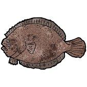 flat fish illustration
