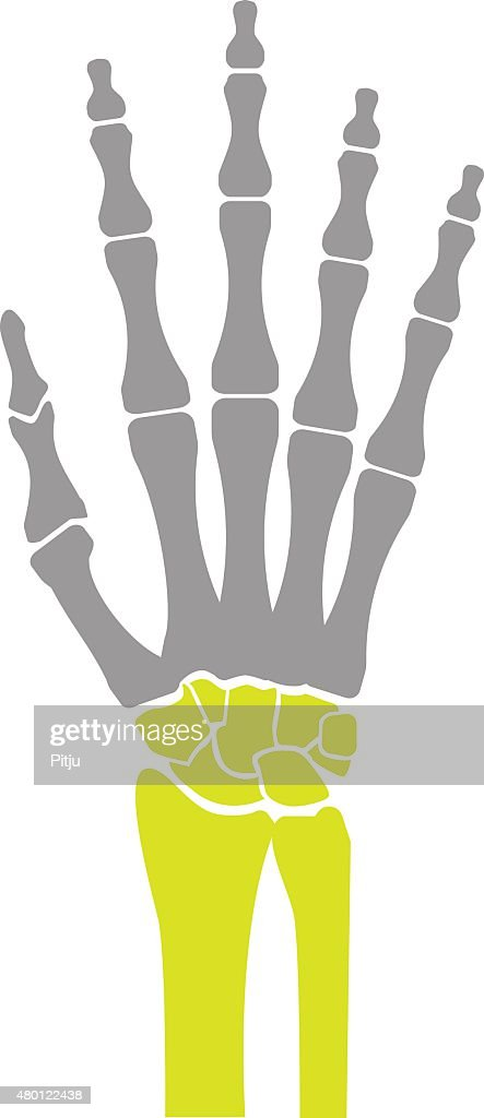 Flat Icon of Hand Bones on White Background