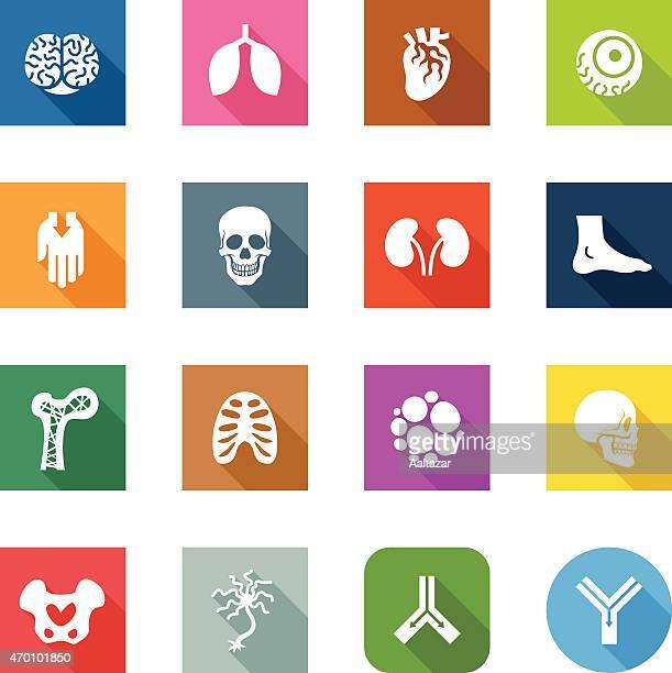 flat icons - anatomy - artery stock illustrations, clip art, cartoons, & icons