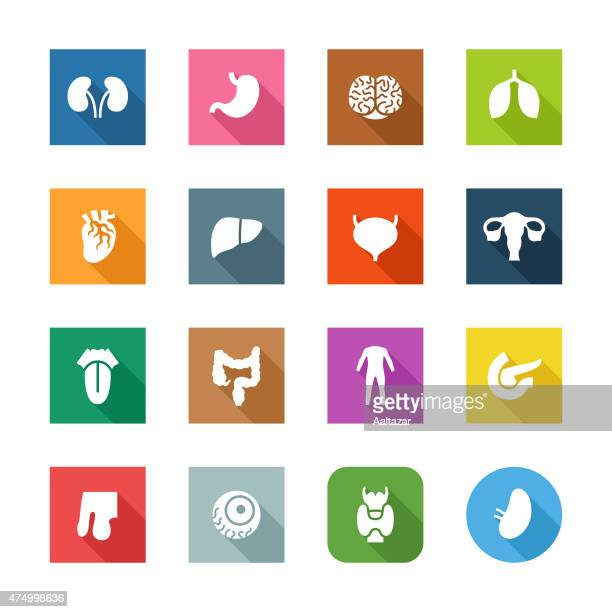 flat icons - human organs - colon stock illustrations