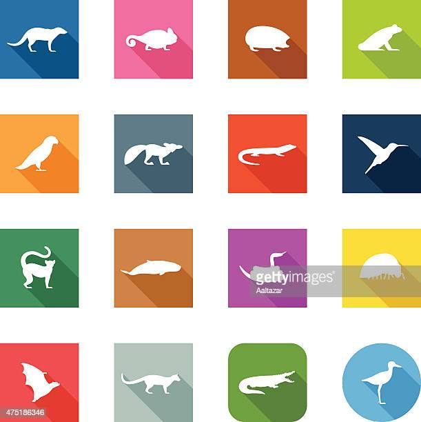 flat icons - madagascar animals - lemur stock illustrations, clip art, cartoons, & icons