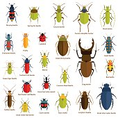 Flat insect set isolated on the white. Vector illustration.