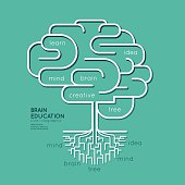 Flat linear Infographic Education Outline Brain Roots Concept.