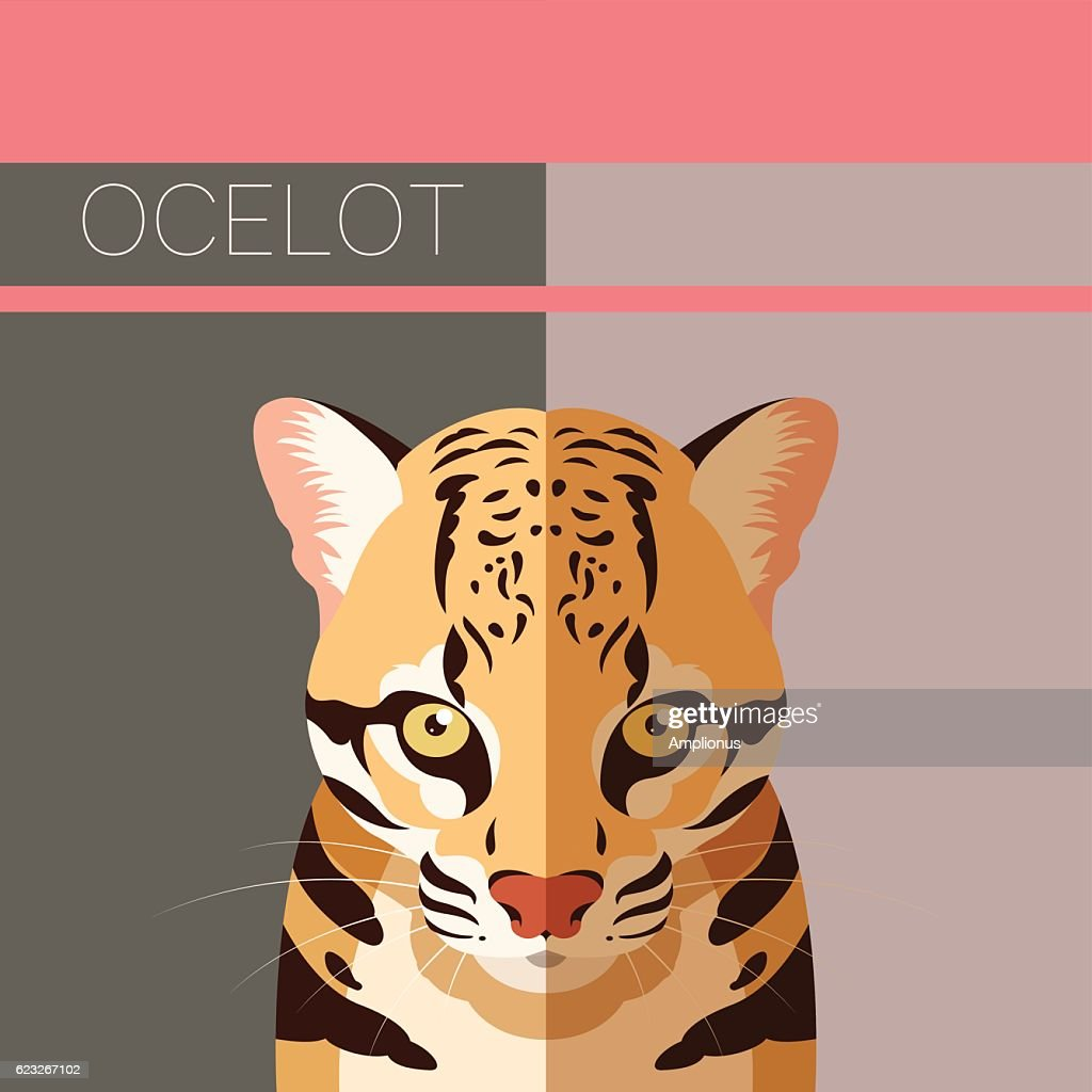Flat postcard with Ocelot