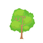 Flat tree with isolated white background vector.Cartoon tree on white.Big plant vector illustration