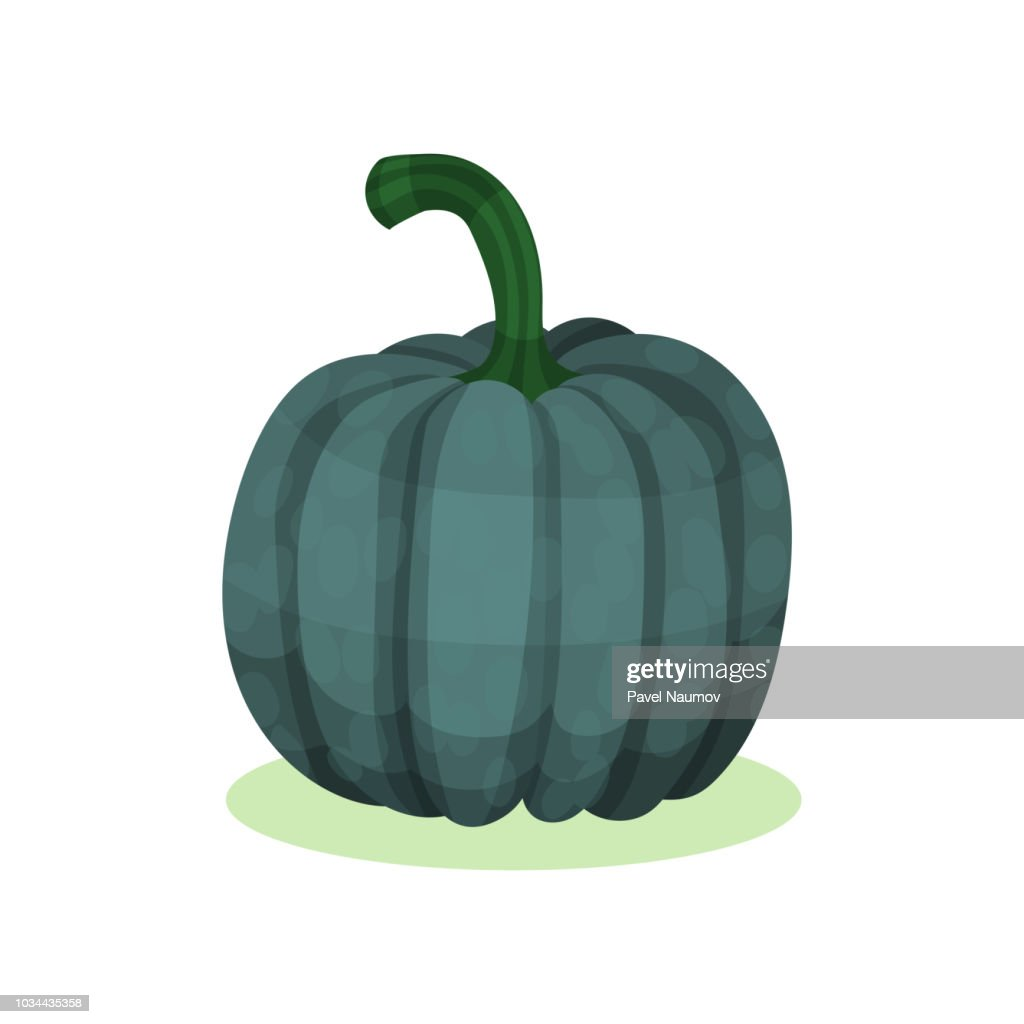Flat vector icon of acorn squash. Natural farm product. Round dark green gourd. Healthy food