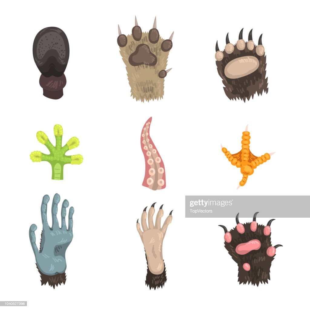Flat vector set of paws of various animals: dog, bear, cat, frog, monkey, chicken leg, horse hoof and tentacle of octopus