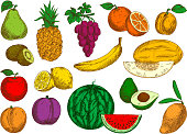 Flavorful and sweet fruits retro colored sketches