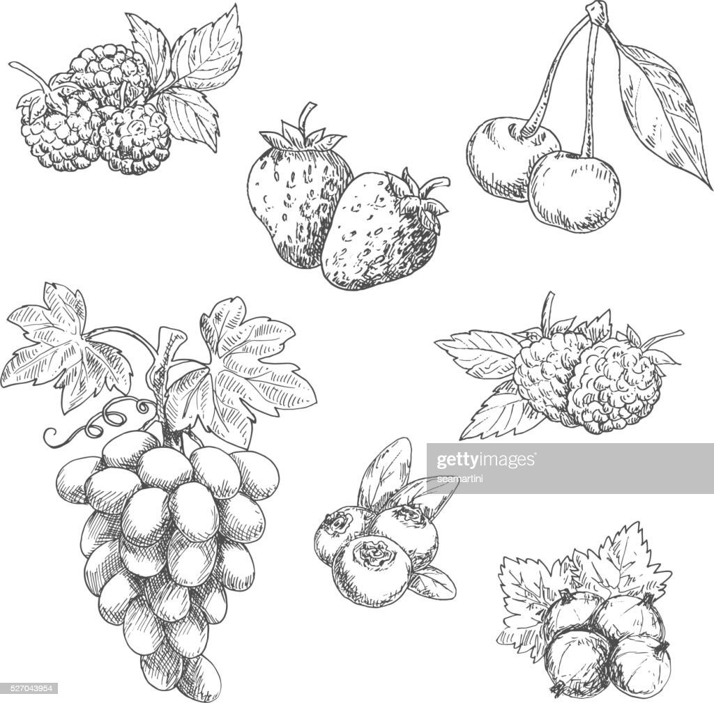 Flavorful fresh garden fruits with leaves sketches