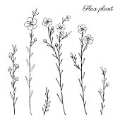 Flax plant, wild field flower isolated on white, botanical hand drawn sketch vector doodle illustration, line art for design package organic cosmetic, natural medicine, greeting cards, vegan food