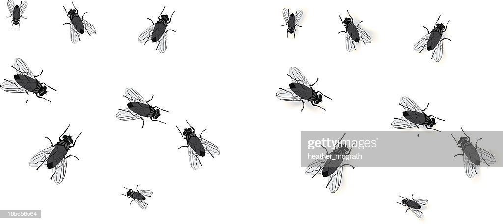 Flies : stock illustration