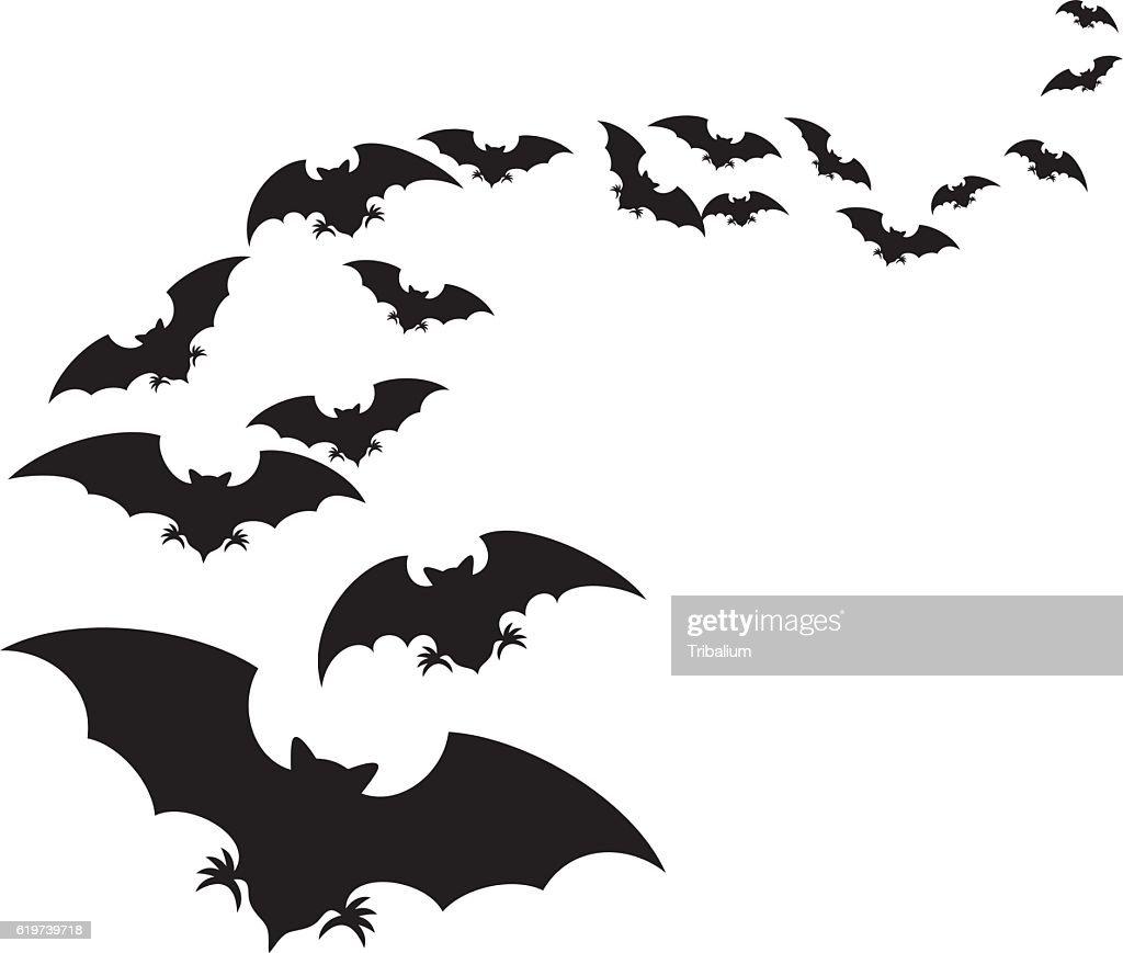 flock of bats