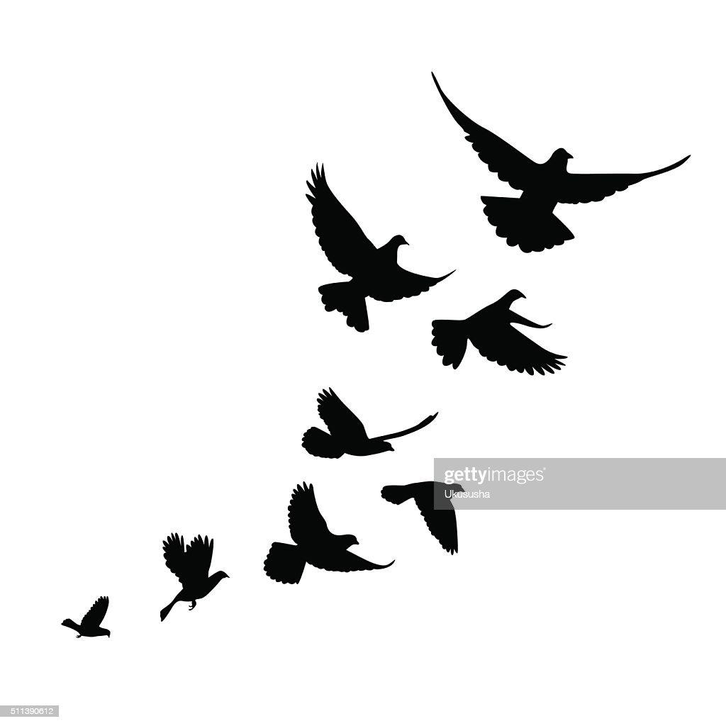 flock of birds (pigeons) go up.