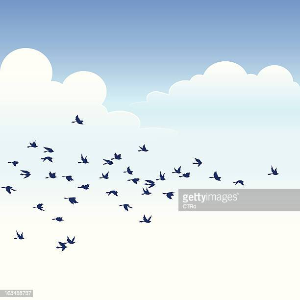 flock of birds - group of animals stock illustrations, clip art, cartoons, & icons