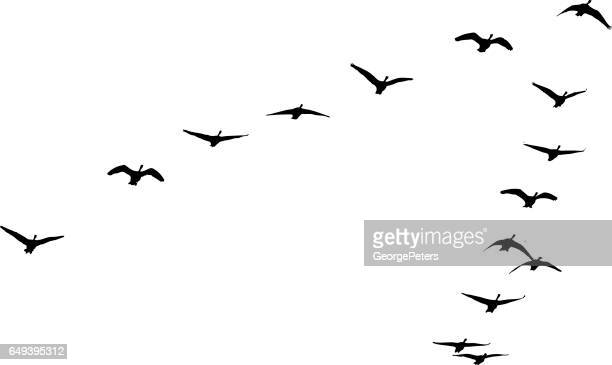 flock of canada geese flying in formation - flying stock illustrations