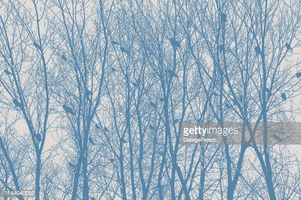 flock of crows perching in bare trees - rookery stock illustrations