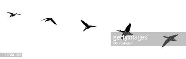 flock of ducks flying in formation. silhouette line art. - duck stock illustrations, clip art, cartoons, & icons