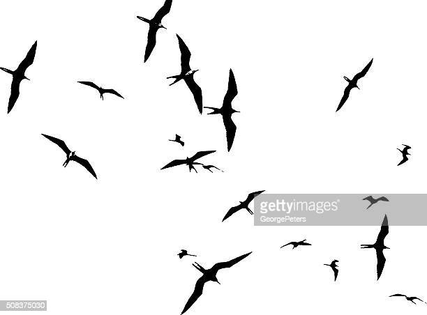 flock of frigate birds floating on air currents - panama city panama stock illustrations, clip art, cartoons, & icons
