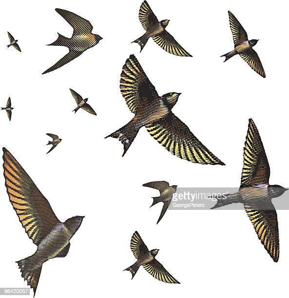 Flock of Swallows Engraving