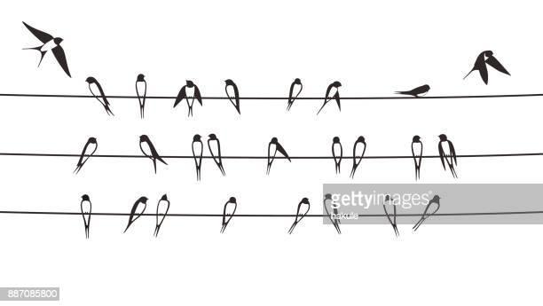 illustrations, cliparts, dessins animés et icônes de hirondelles de troupeau sur le fil électrique, illustration vectorielle - hirondelle