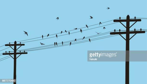 ilustrações de stock, clip art, desenhos animados e ícones de flock swallows on the electric wire, vector illustration - poste