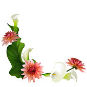 Floral background. Callas. Dahlia. Flowers. Pink. Petals. Border. Green leaves. Flower pattern. White.