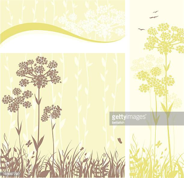 Anís flores banners florales: