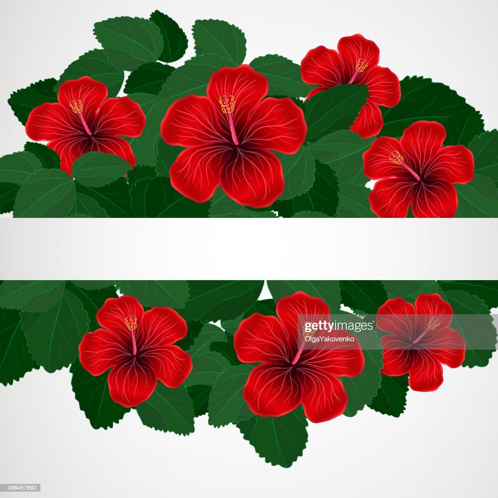 Floral Design Background Hibiscus Flowers Vector Art Getty Images