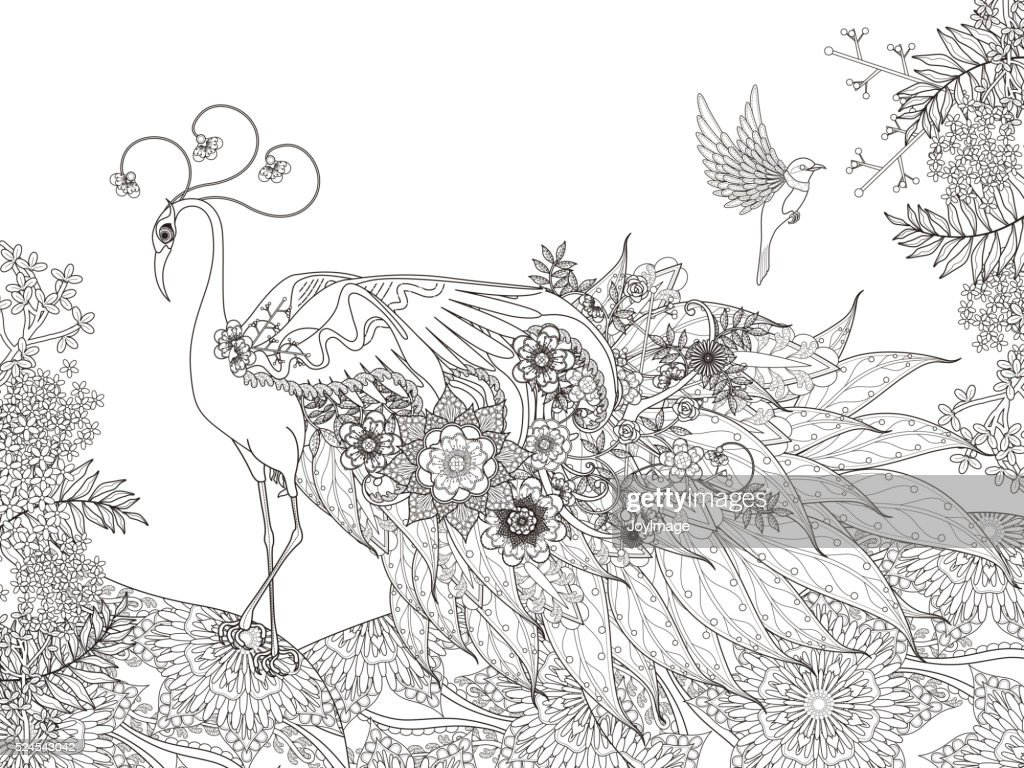 floral feather peacock coloring page