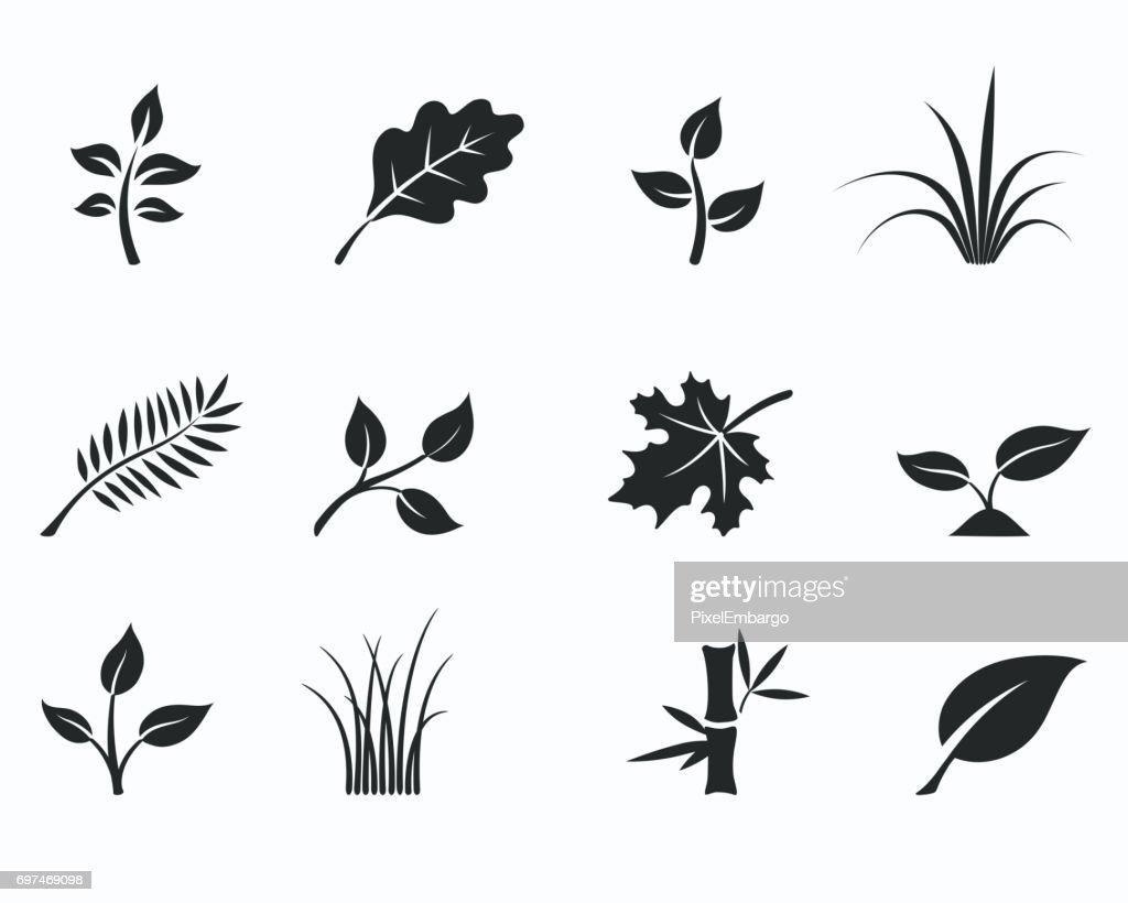 floral icon set
