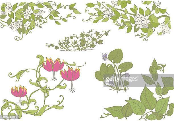floral illustration of jasmine gloriosa violets leaves and vines