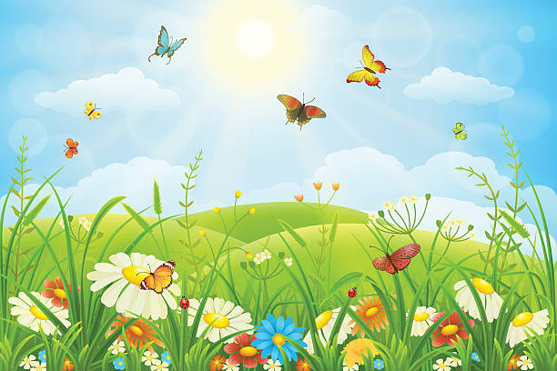 Free Insect Butterfly Insect Ladybug Images Pictures And Royalty