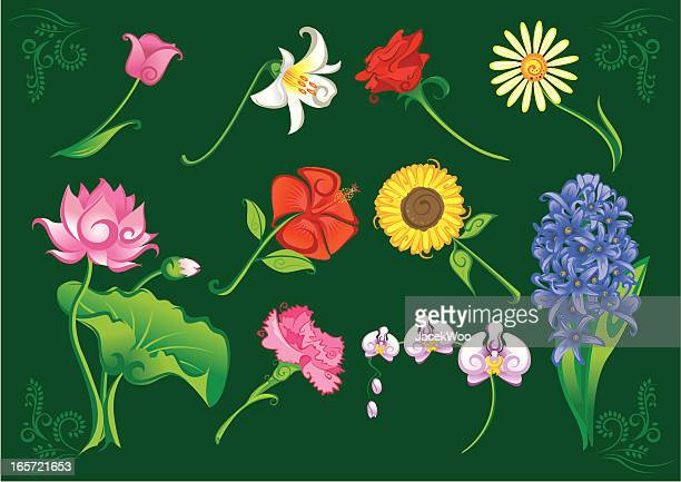 floral parade - carnation flower stock illustrations, clip art, cartoons, & icons