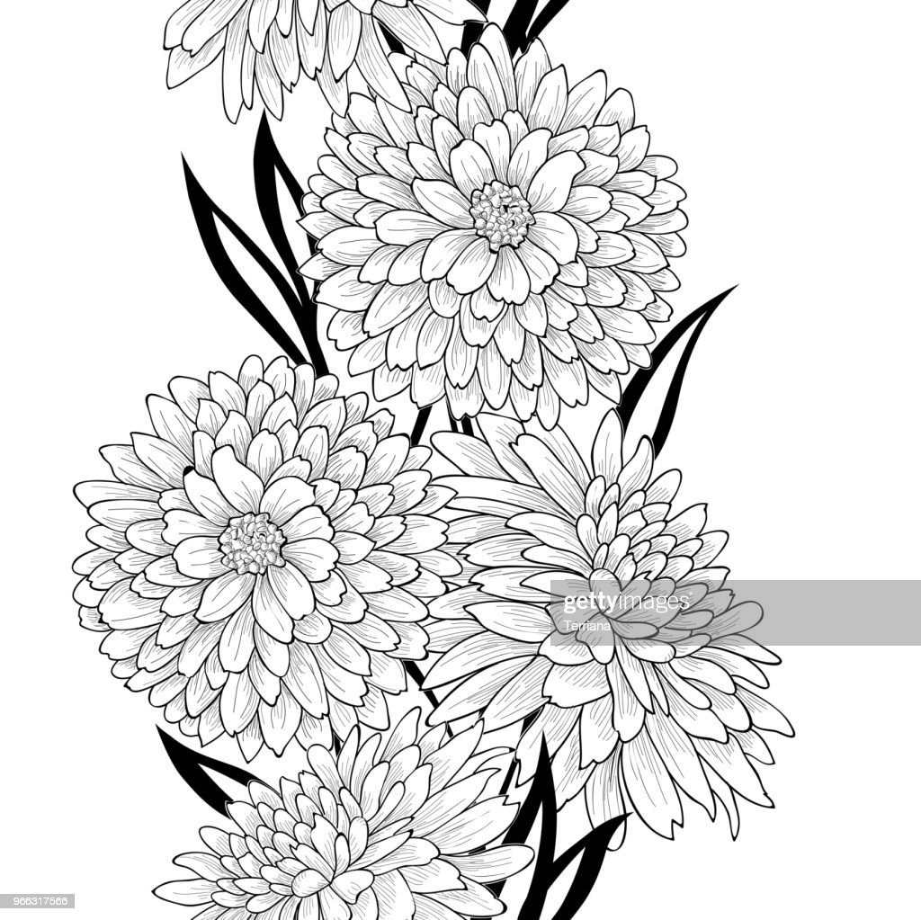 Floral seamless pattern. Flower chrysanthemums line art background. Garden texture.