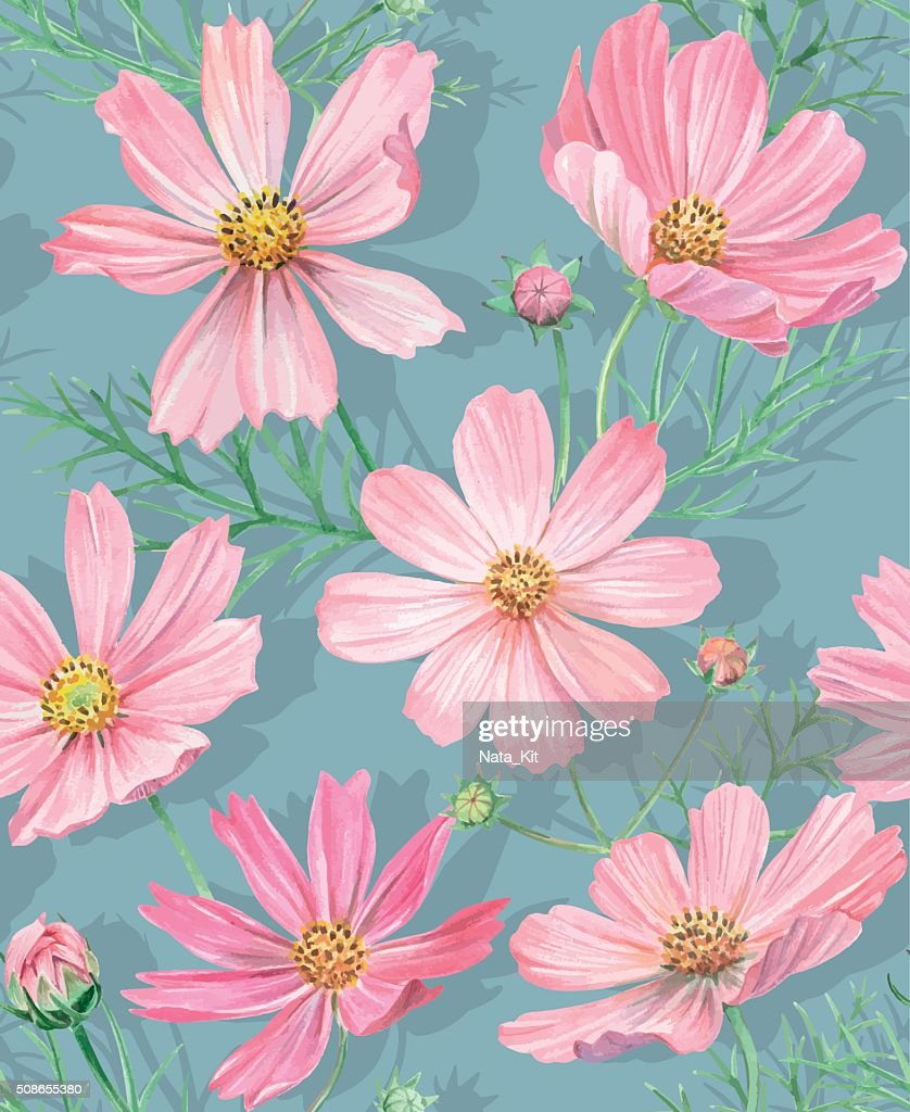 Floral seamless pattern with cosmos flowers